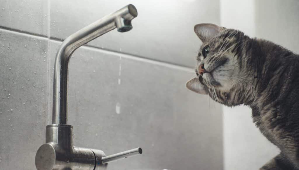 Instalar un perlizador en el grifo permite ahorrar agua caliente